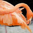 The Flamingo by Caren