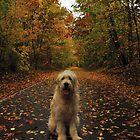 Autumn Willow by AraujoW