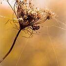 Golden Gossamer by Jeanne Sheridan