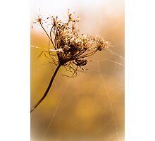 Golden Gossamer Photographic Print