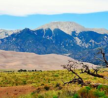 Great Dunes by Skip Hunt
