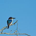 Forest Kingfisher - Kakadu National Park, NT by Dilshara Hill