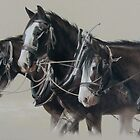 The Workhorse. by Heidi Schwandt Garner