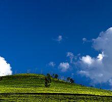Green Tea by Vikram Franklin