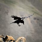 Landing by Reese Ferrier