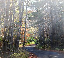 A Country Walk in Northern Maine by Gary Smith