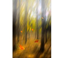 Shed leaves Photographic Print