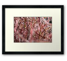 Lost in the Bubble  - JUSTART © Framed Print