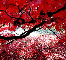 Under the Bough ~ Westonbirt by Josephine Pugh