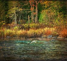 Gone Fishing in Northern Maine by Gary Smith