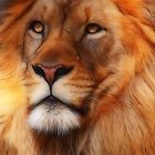 The Lion King by Ann  Van Breemen