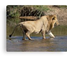 Majingilane Male Crossing River Canvas Print