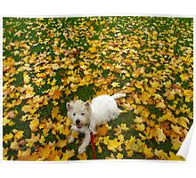 A Westie Autumn Breeze Poster
