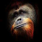 Orangutan Portrait by Jon Staniland
