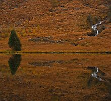 Llyn Dinas Reflection by James Grant