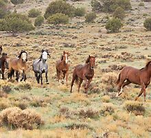 Sagebrush Run by Kent Keller