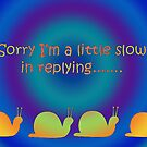 Sorry---reply card with snails by sarnia2