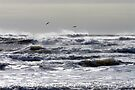 Pelicans Playing - Port Aransas, Texas by Debbie Pinard