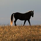 Field and Horse of Gold by sandyelmore