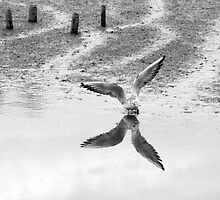 This Birds Reflection by Paul Rumsey