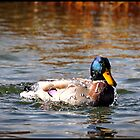 Duck All Wet by tc5953