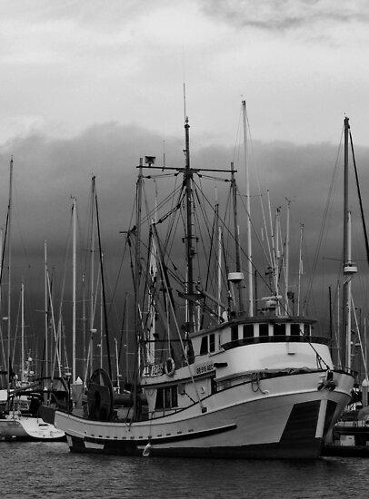 In the Harbor by Corri Gryting Gutzman