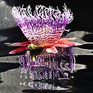 United States Botanical Gardens - Passion Flower by Matsumoto