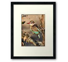 Brown Hooded Kingfisher Framed Print
