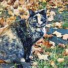 Autumn Cat by rocamiadesign