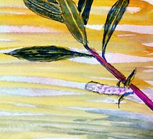 Salix Daphnoides by John Moore
