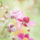 Anemonies by Mandy Disher