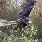 Eagle Owl by Peter Barrett
