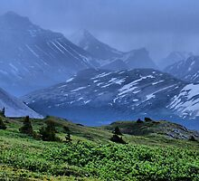 From the Top of Wilcox Pass2 by Vickie Emms