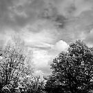 Black and white autumn by David Robinson