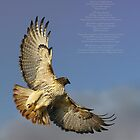 hawk ascending by bangonthedrums