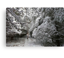 A Walk In The Snowy Forest Canvas Print