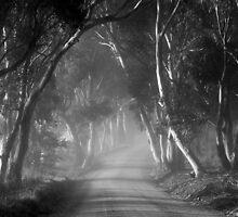 ~ Follow Me II ~ by LeeoPhotography
