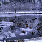 First Snowfall by Larry Trupp