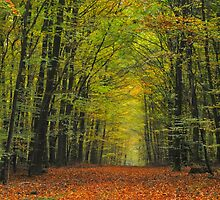 October in Germany by Gayle Dolinger