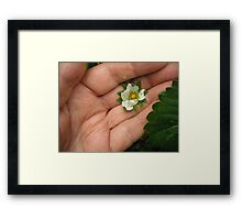 Flower in Hand Framed Print