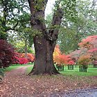 Tree framed by fantastic acers by Sarah Howes