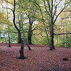 Red leaf cover - Windsor Great Park by Sarah Howes