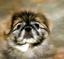 Max the Pekingese by Gary Smith
