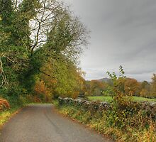 The Colours of Autumn-Finsthwaite Lane by VoluntaryRanger