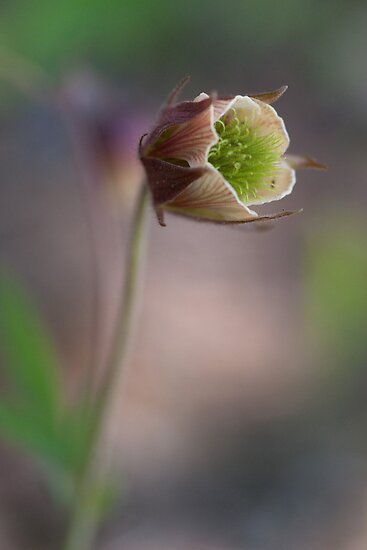 My Geum, Alone... by finnarct