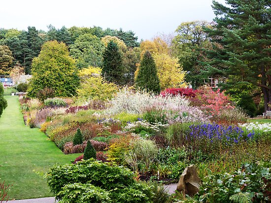 Autumn at Harlow Carr, Harrogate #1 by Colin Metcalf