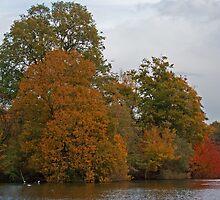 Autumn Lake by Gill Langridge