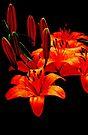 Floating Flowers 6 by Debbie Pinard