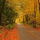 The road to Autumn by Rachel Slater