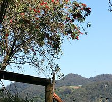 Fence on the Mountain, Tallebudgera Valley by aussiebushstick